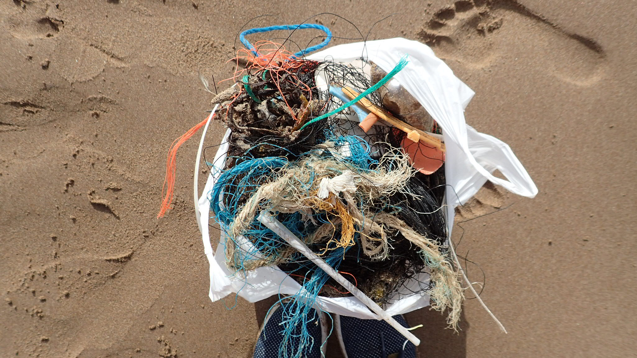 Sam certainly picked up the most plastic on this beach clean
